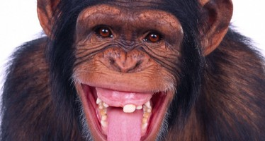 MONKEYS ARRAIGNED FOR ROBBING SENIOR POLICE OFFICER OF N50, 000 IN ONITSHA