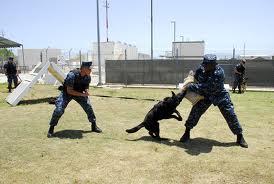 training (2)