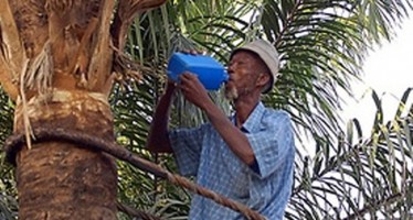 CUSTOMER BEATS PALM WINE TAPPER TO A PULP OVER N1, 000 DEBT