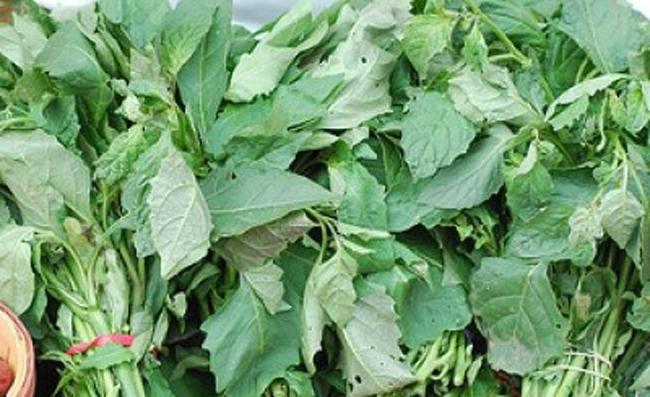 OrijoReporter.com Bitter leaf Cures Hepatitis