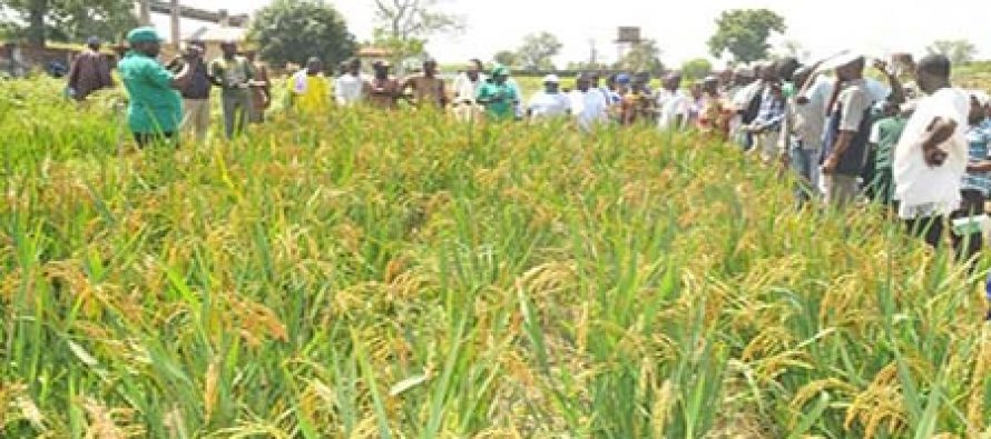 Farmers are now kings – President, Rice Farmers