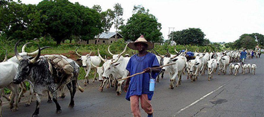 We will sue Fayose over Ekiti cattle grazing ban – Buhari's son-in-law