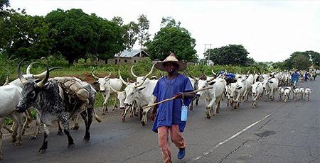 OrijoReporter.com, Ekiti Cattle Grazing Ban