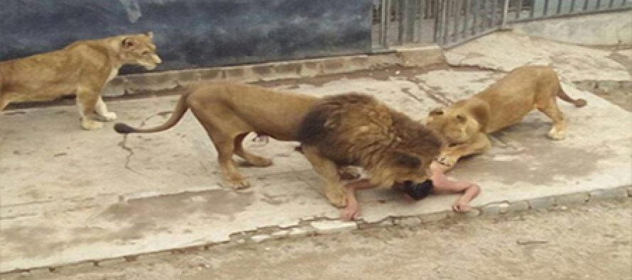 Man who fed himself to lions thought he was Prophet