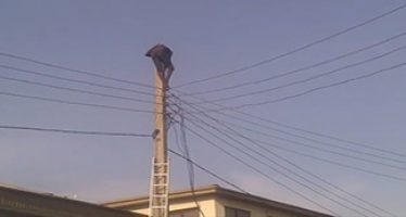 (video) Man attempts suicide on electric pole