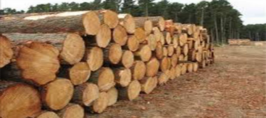 Chinese national arraigned for exporting wood