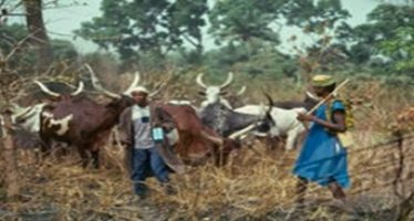 Ekiti lawmakers pass bill banning free grazing