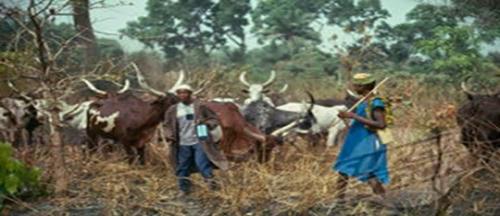 OrijoReporter.com, Ekiti bill banning free grazing