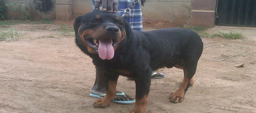 Man arrested for naming dog after Buhari