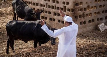 Buhari is worshipping cows – Abubakar Shekau