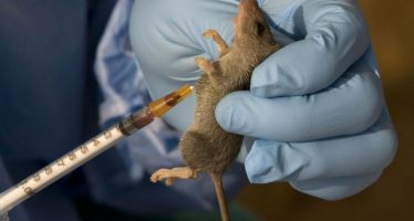 3 persons are diagnosed with Lassa Fever daily – Expert