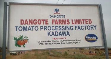 Dangote laments importation of tomato paste
