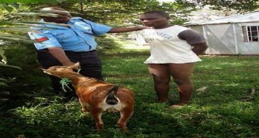 Man rapes goat to death in Ondo