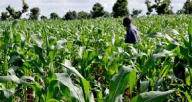 The N10bn agriculture fund for women By Jide Ayobolu
