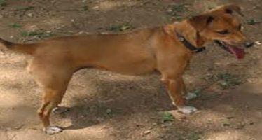 Dog eats new born baby dumped in refuse bin in Bauchi