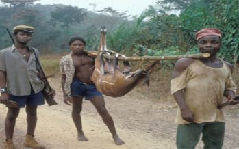 Hunt animals, go to jail, NCF warns