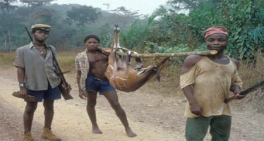 Hunt animals, go to jail, NCF warns