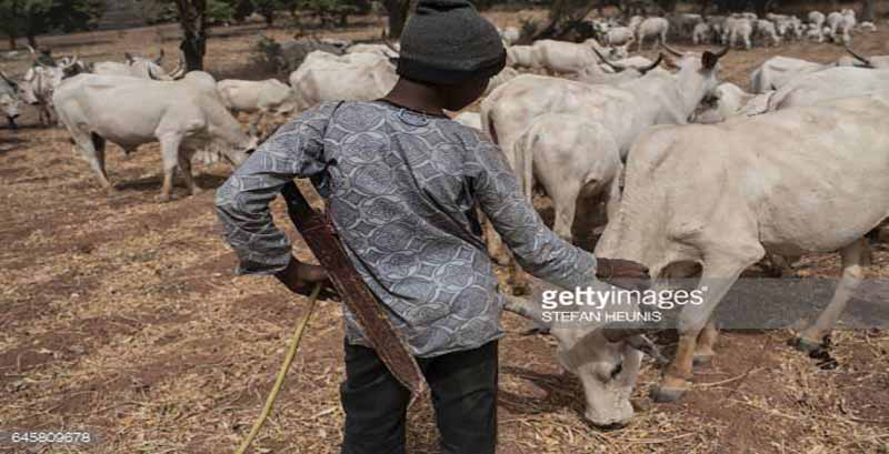 OrijoReporter.com, Fulani herdsman