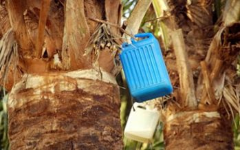 Enugu LG boss calls on investors to fund palm wine industry