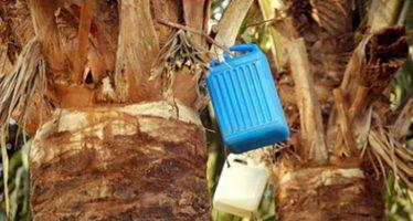 Enugu LG boss calls on investors to fund palm wine industry