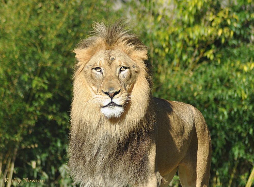 OrijoReporter.com, Ibadan zoo