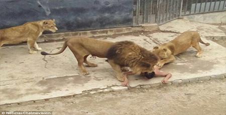 OrijoReporter.com, man who fed himself to lions