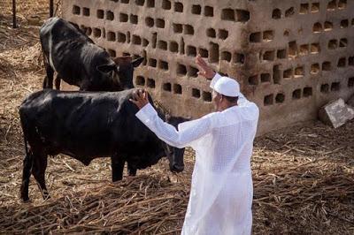 OrijoReporter.com, Abubakar Shekau